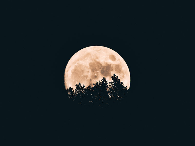 Full moon rising from behind trees
