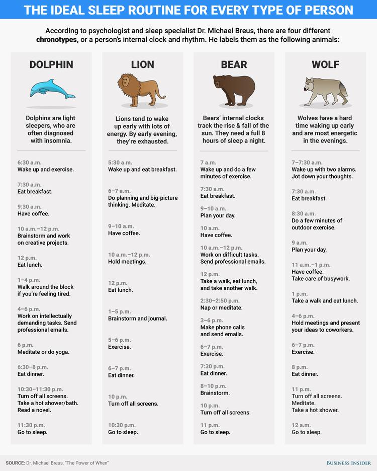 chronotypes infographic
